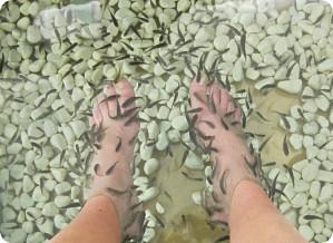 Peeling natural. Exfoliación natural Fish SPA en Paracuellos. Peluquería SEVI